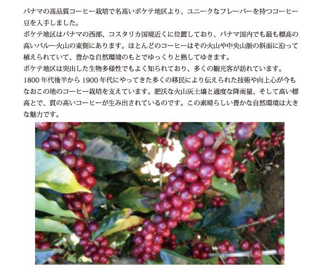 パナマコーヒー アンセルミート農園コーヒー豆紹介02