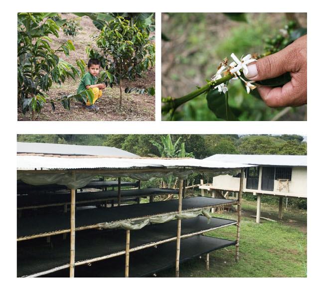 コロンビアコーヒー マリア農園004
