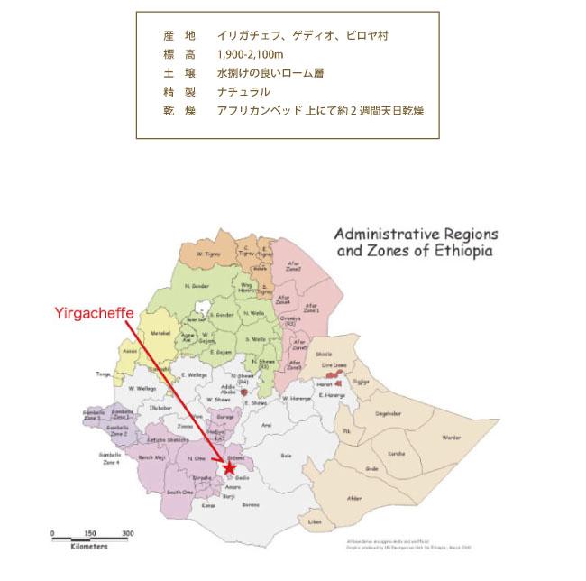 エチオピアコーヒー モカ・アビシニア コーヒー説明04