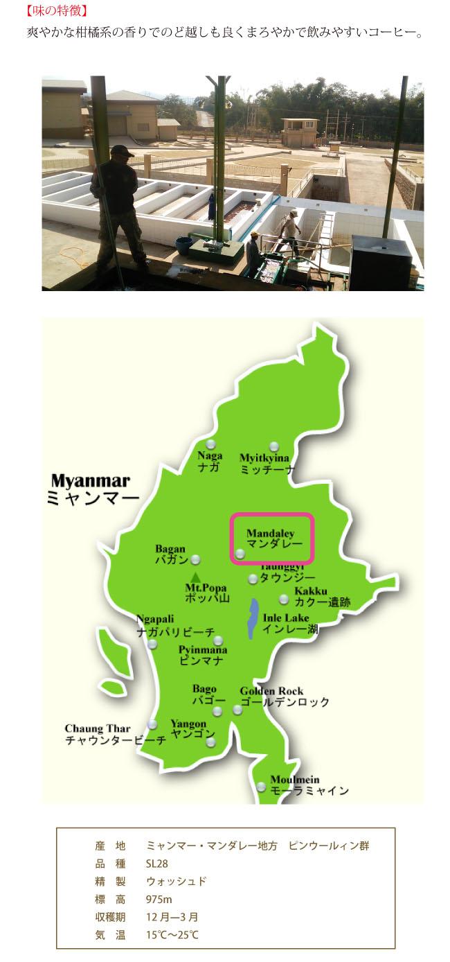 ミャンマー・シッター農園の説明03